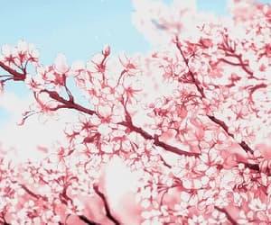 cherry blossom and sakura image