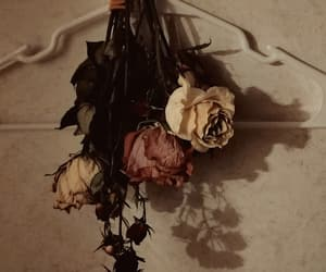dried flowers, wicca, and dark beauty image