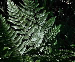 fern and plant image