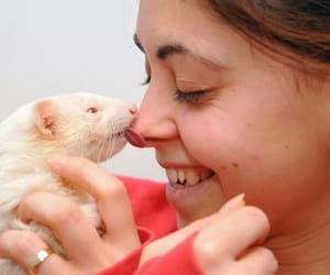 kiss, ferret, and ferret kiss image