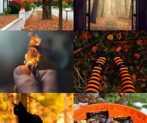 Halloween and autumn image