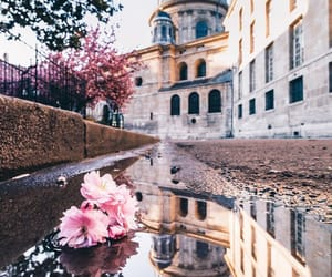 flower, travel, and aesthetic image