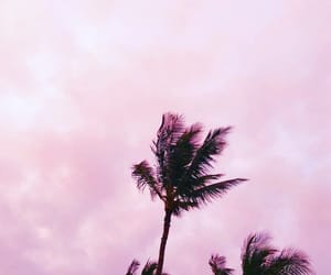 palm trees, pink, and cute image