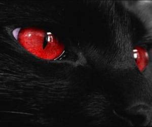 cat, dark, and red image