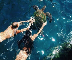 summer, ocean, and turtle image
