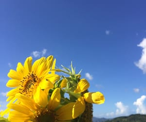 flower, sky, and spring image