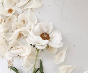 flowers, white, and petals image