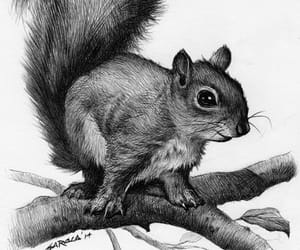 drawing and squirrel image