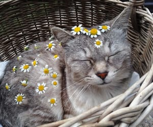 cat, flowers, and relax image