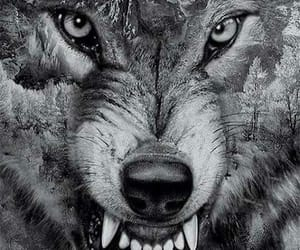 art, wolves, and blk & wht image