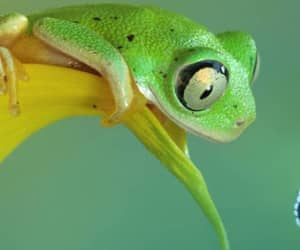frogs, green, and nature image