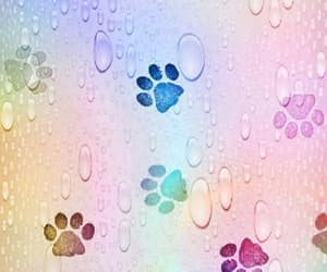 colors, wallpaper, and dogs image