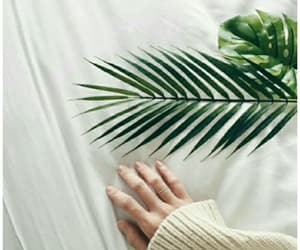aesthetic, green, and plants image
