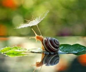 snail, nature, and animal image