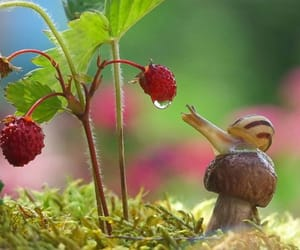 snail and nature image