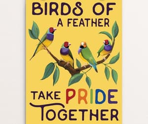 birds, birds of a feather, and pride image