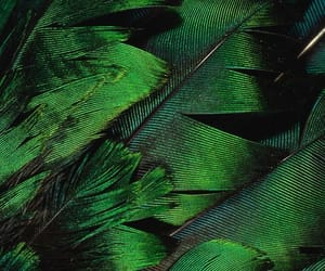 green, feather, and nature image