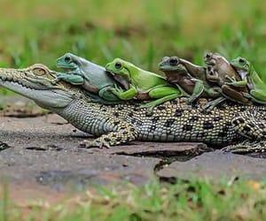 naturaleza, rana, and Animales image