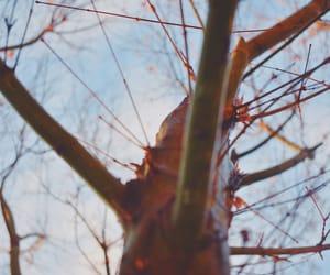 arbol, natural, and nature image