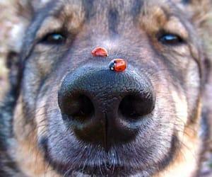 cachorro, dog, and joaninha image