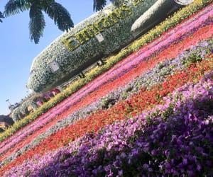 Dubai, emirates, and flowers image