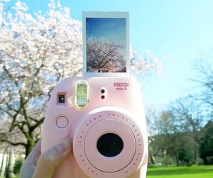 polaroid, aesthetic, and flowers image