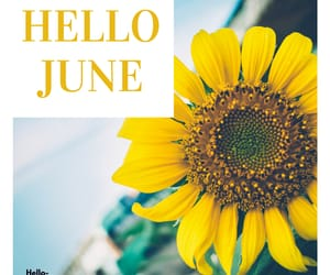 hello june summer images, hello june flower images, and hd hello june photos image