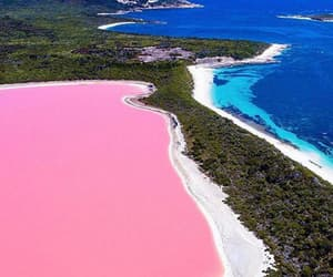 pink, blue, and nature image