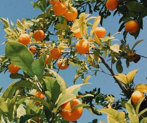 fruit, citrus, and nature image