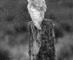 owl and 🌺 image
