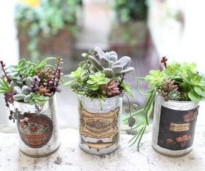 cactus, decorative, and plant image