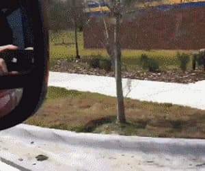 gif, on the road, and haha image
