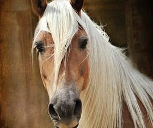 animals, equine, and horses image