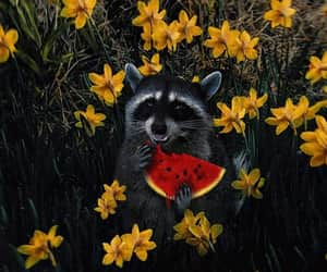 flowers, raccoon, and watermelon image