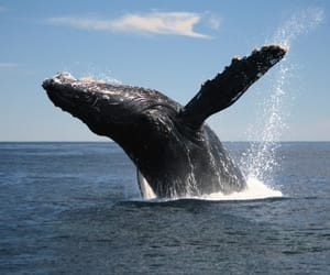 whalewatching, familyvacation, and pacificnorthwestisthebest image
