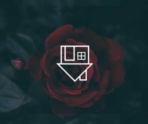 aesthetic, rock, and rose image