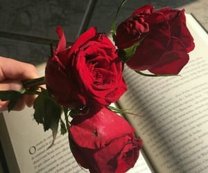 rose, flowers, and book image