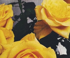 rose, yellow, and flowers image