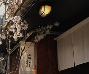 aesthetic, architecture, and flowers image