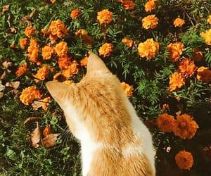 cat, flowers, and orange image