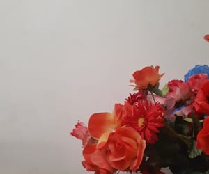 flores, flowers, and orange image