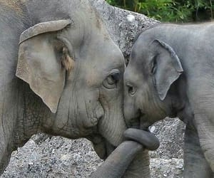 elephant, animal, and love image