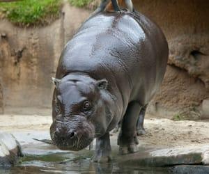 Animales, naturaleza, and moño image