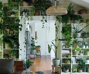 green, interior, and nature image