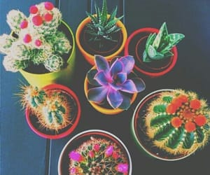 cacti, colored, and tropical image