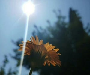 flower, sun, and time image