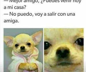 fuck, perro, and mejor amigo image