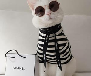 cat, chanel, and aesthetic image