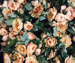 flor image