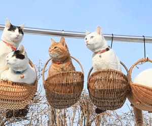 gif, cats in basket gif, and kittys gif image